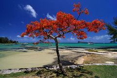 δέντρο φλογών στοκ εικόνα με δικαίωμα ελεύθερης χρήσης