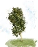 Δέντρο Watercolor σημύδων Στοκ φωτογραφία με δικαίωμα ελεύθερης χρήσης