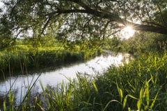 Ένωση δέντρων πέρα από τον ποταμό Στοκ Εικόνες