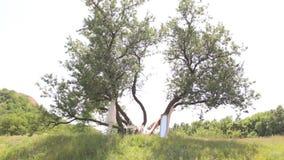 Ένωση γαμήλιων φορεμάτων στο διακοσμημένο δέντρο απόθεμα βίντεο
