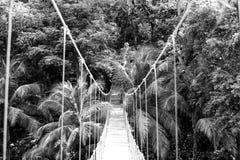 Ένωση γεφυρών θόλων στο τροπικό δάσος της Ονδούρας Στοκ εικόνες με δικαίωμα ελεύθερης χρήσης