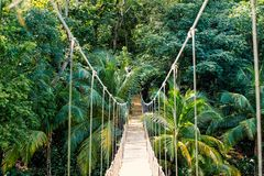 Ένωση γεφυρών σχοινιών ζουγκλών στο τροπικό δάσος της Ονδούρας στοκ φωτογραφία με δικαίωμα ελεύθερης χρήσης