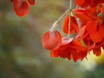 ένωση κήπων Στοκ εικόνες με δικαίωμα ελεύθερης χρήσης