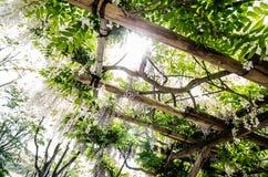 ένωση κήπων στοκ φωτογραφίες με δικαίωμα ελεύθερης χρήσης