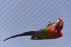 Ένωση παπαγάλων από έναν φράκτη Στοκ Φωτογραφίες