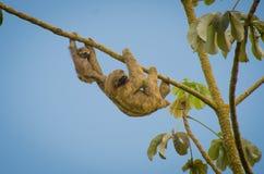 Ένωση τρυφερότητας από ένα δέντρο στοκ φωτογραφίες με δικαίωμα ελεύθερης χρήσης