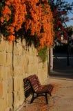 Ένωση των πορτοκαλιών λουλουδιών που ανθίζουν wintertime πέρα από έναν κόκκινο πάγκο Στοκ Φωτογραφίες