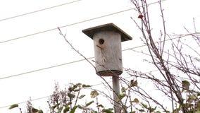 Ένωση Birdhouse σε ένα δέντρο το φθινόπωρο απόθεμα βίντεο