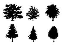 Έξι σκιαγραφίες δέντρων Στοκ φωτογραφίες με δικαίωμα ελεύθερης χρήσης