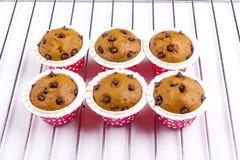 Έξι muffin κέικ Στοκ Φωτογραφία