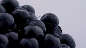 Έξοχη στενή μακροεντολή των βακκινίων που περιστρέφονται στην περιστροφική πλάκα που απομονώνεται στο άσπρο υπόβαθρο απόθεμα βίντεο