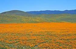 Έξοχοι λόφοι, Καλιφόρνια στοκ εικόνα
