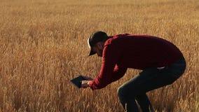 Έξυπνες χρησιμοποιώντας σύγχρονες τεχνολογίες καλλιέργειας στη γεωργία Ο αγρότης γεωπόνων κρατά την ψηφιακή επίδειξη υπολογιστών  απόθεμα βίντεο