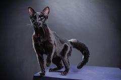 Έξυπνη εύθυμη μαύρη γάτα σε ένα μαύρο υπόβαθρο Στοκ Φωτογραφίες