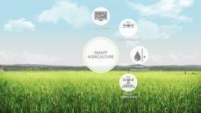 Έξυπνη έξυπνη καλλιέργεια γεωργίας, γραφικό εικονίδιο πληροφοριών, Διαδίκτυο των πραγμάτων 4η Βιομηχανική Επανάσταση ελεύθερη απεικόνιση δικαιώματος