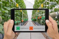 Έξυπνη καλλιέργεια Iot, βιομηχανία 4 γεωργίας η έννοια 0 τεχνολογίας, λαβή αγροτών η ταμπλέτα στη χρήση αύξησε τη μικτή εικονική  στοκ φωτογραφία