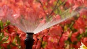 Έξυπνος κήπος με ένα πλήρως αυτόματο σύστημα άρδευσης, αζαλέες νερού απόθεμα βίντεο