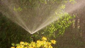 Έξυπνος κήπος με ένα πλήρως αυτόματο σύστημα άρδευσης, αζαλέες νερού φιλμ μικρού μήκους