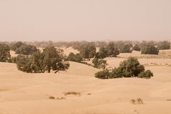 Έρημος άμμου με τα πράσινα δέντρα στο Μαρόκο στοκ φωτογραφία με δικαίωμα ελεύθερης χρήσης