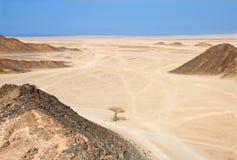 έρημος Αιγύπτιος Στοκ εικόνες με δικαίωμα ελεύθερης χρήσης