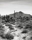 Έρημος Αριζόνα Sonora στοκ εικόνα με δικαίωμα ελεύθερης χρήσης