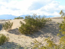 έρημος θάμνων Στοκ Φωτογραφίες