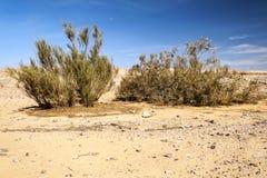 Έρημος Ιορδανού Στοκ εικόνες με δικαίωμα ελεύθερης χρήσης