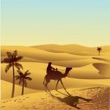Έρημος και καμήλα Σαχάρας Στοκ Εικόνα