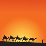 Έρημος και καμήλες Σαχάρας Στοκ φωτογραφία με δικαίωμα ελεύθερης χρήσης