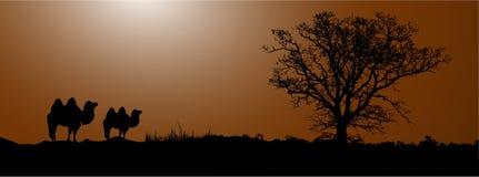 έρημος καμηλών διανυσματική απεικόνιση