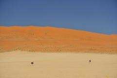έρημος Ναμίμπια Στοκ Εικόνες
