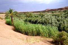 Έρημος οάσεων στα βουνά ατλάντων στο Μαρόκο Στοκ Εικόνες