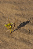 έρημος πράσινη Στοκ φωτογραφία με δικαίωμα ελεύθερης χρήσης