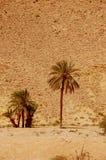Έρημος Σαχάρας καλοκαιριού στην Τυνησία Στοκ φωτογραφίες με δικαίωμα ελεύθερης χρήσης