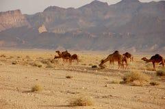 Έρημος Σαχάρας καλοκαιριού στην Τυνησία Στοκ Φωτογραφίες