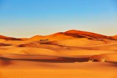 έρημος Σαχάρα τροχόσπιτων καμηλών Στοκ Εικόνα