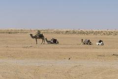 έρημος Σαχάρα Στοκ Φωτογραφία