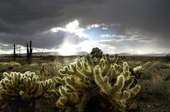 έρημος της Αριζόνα Στοκ φωτογραφία με δικαίωμα ελεύθερης χρήσης