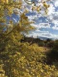 Έρημος της Αριζόνα Sonoran Στοκ φωτογραφίες με δικαίωμα ελεύθερης χρήσης