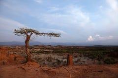 Έρημος της Κολομβίας Στοκ εικόνα με δικαίωμα ελεύθερης χρήσης