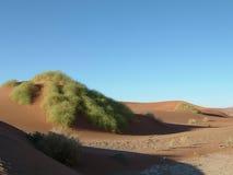 έρημος 0 namib Στοκ Φωτογραφίες