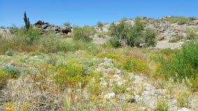 έρημος judean Στοκ φωτογραφία με δικαίωμα ελεύθερης χρήσης