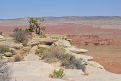 έρημος moab Στοκ Φωτογραφία