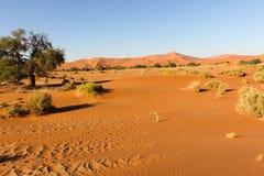 Έρημος Namib, Ναμίμπια Στοκ Φωτογραφία