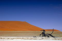 έρημος namib Ναμίμπια Στοκ φωτογραφίες με δικαίωμα ελεύθερης χρήσης