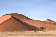 Έρημος Namib, Ναμίμπια Στοκ εικόνες με δικαίωμα ελεύθερης χρήσης