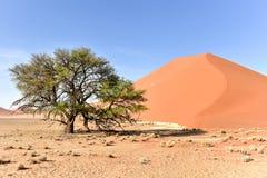Έρημος Namib, Ναμίμπια Στοκ φωτογραφία με δικαίωμα ελεύθερης χρήσης