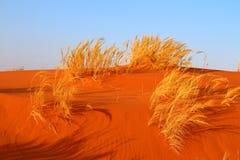 Έρημος Namib, Ναμίμπια Στοκ Φωτογραφίες