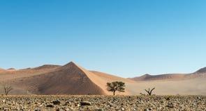 έρημος namib Ναμίμπια Στοκ Φωτογραφία