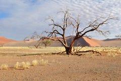 έρημος namib Ναμίμπια deadvlei Στοκ Εικόνες